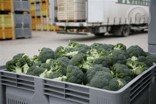 Brócoli en caja