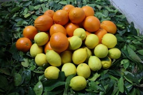 Limones & Naranjas