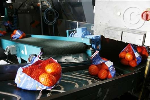Línea Embolsado Naranjas
