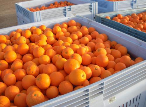Naranjas en caja