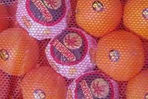 Naranja Navel Navelina