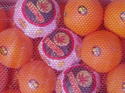 Naranja Navel Navelina embolsada malla